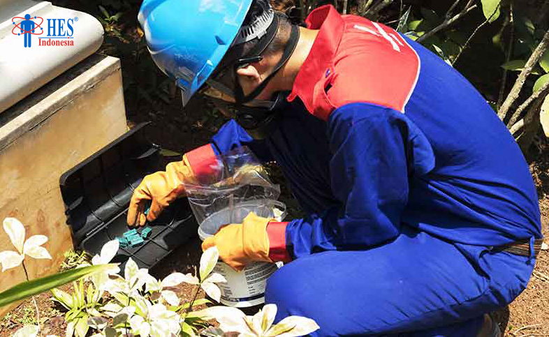 Trik Pest Control agar Hama Tidak Balik Lagi